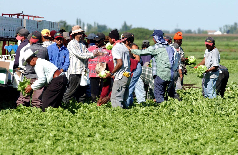 La récolte amère des travailleurs agricoles migrants