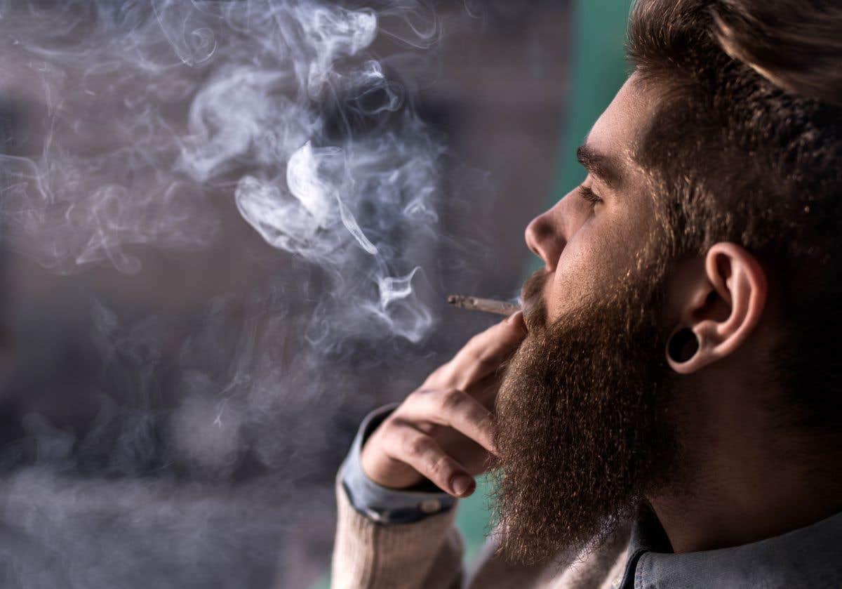 Le duo du jour: marijuana et cannabis