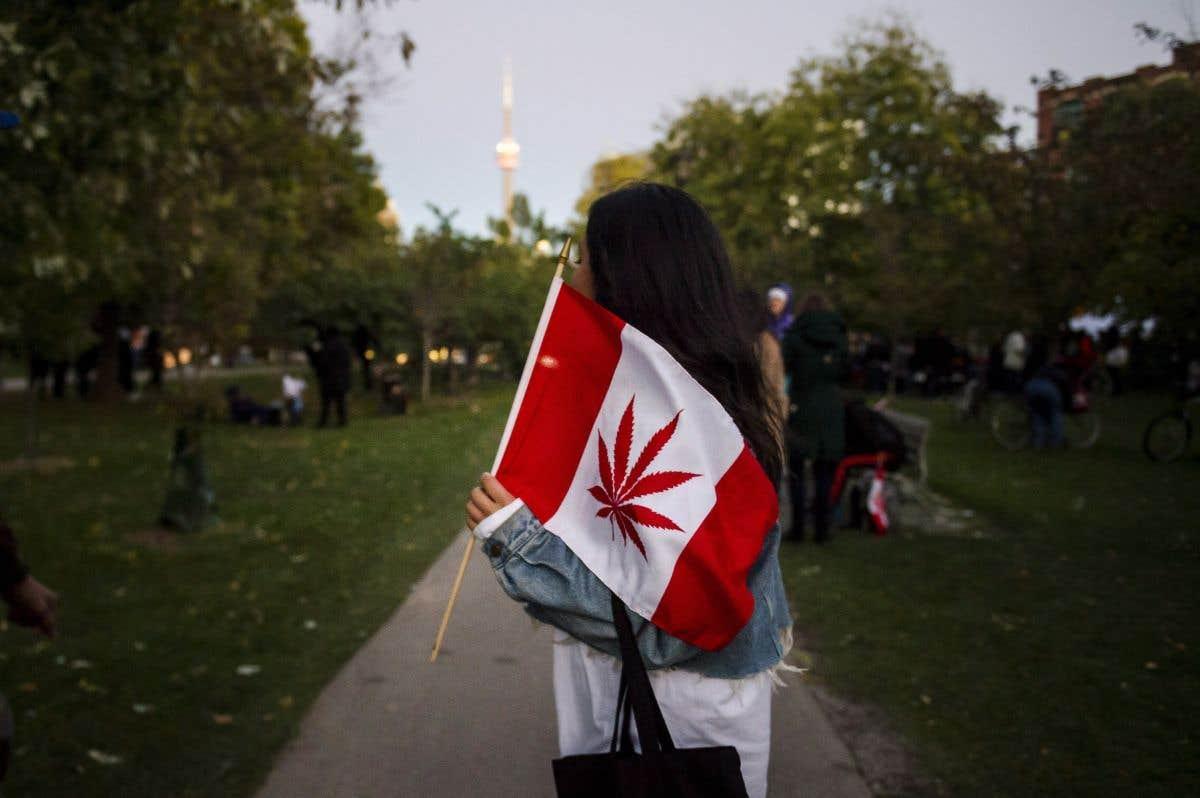 Le cannabis, jour 2