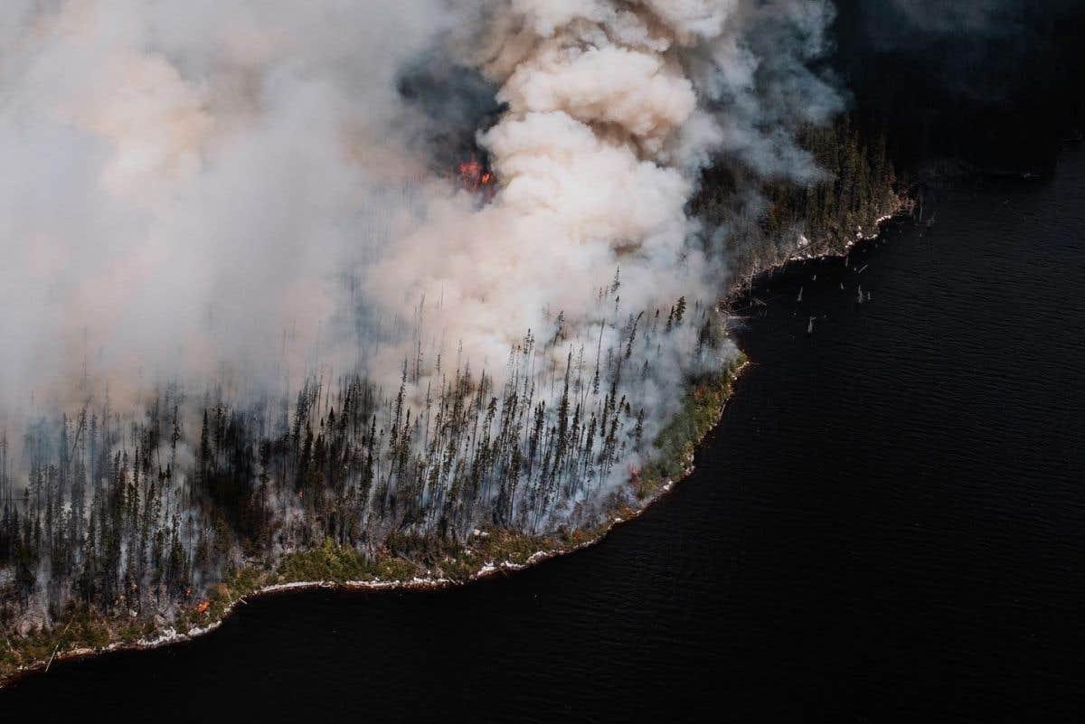 Un feu de forêt fait des ravages