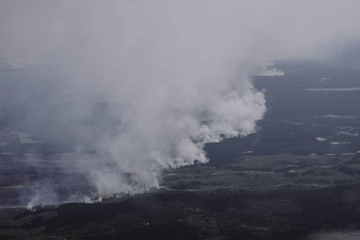 Plus de renforts pour les feux de forêt