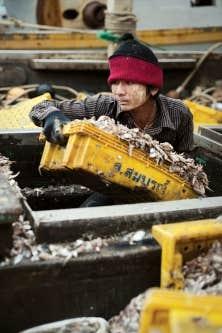 Un fournisseur de crevettes est accusé de recourir à de la farine de poisson issue de l'esclavage. Des centaines de migrants birmans et cambodgiens seraient exploités par des sous-traitants, qui iraient jusqu'à exécuter les esclaves pris en faute. Ci-dessus, un travailleur migrant au port de Sattahip, en Thaïlande.