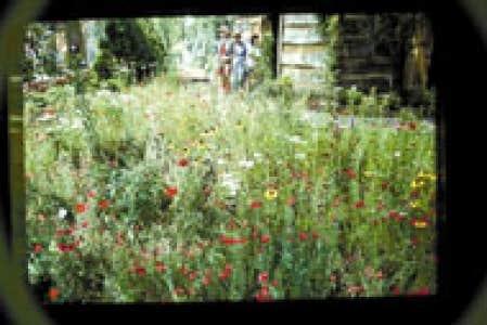 Jardins quand la pelouse devient une prairie fleurie for Quand semer une pelouse