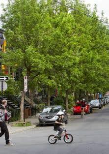 Les derniers relevés aériens effectués en 2007 fixent à environ 20% le couvert végétal à Montréal.