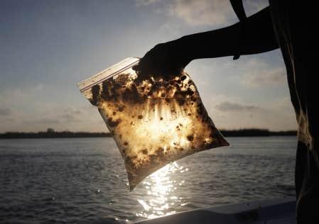 Un homme tient un sac de plastique contenant de l'eau polluée par la nappe de pétrole dans le golfe du Mexique qui a atteint, ce week-end, certaines îles au large de la Louisiane.