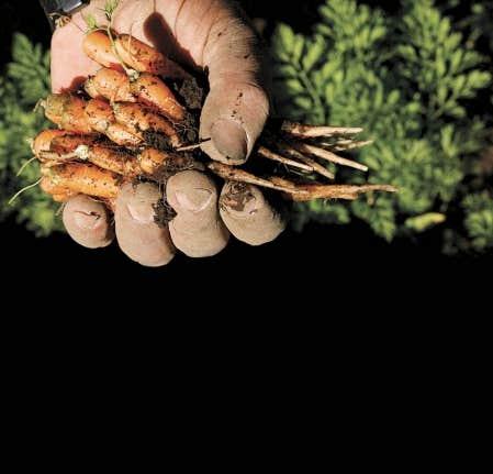 Selon l'Organisation des Nations unies pour l'alimentation et l'agriculture (connue sous l'acronyme FAO), l'indice des prix de l'alimentation a atteint en février son plus haut niveau depuis le début de la collecte des données, en 1990.