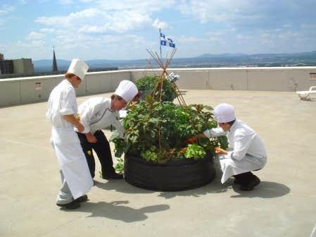 Sur le toit de l&rsquo;h&ocirc;tel Hilton, on r&eacute;colte des fleurs, des fines herbes et des l&eacute;gumes pour les cuisines et les employ&eacute;s.<br />