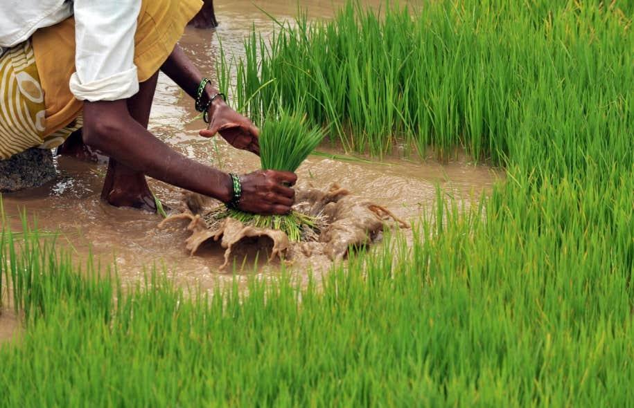 L'UPA et la FAO s'unissent pour l'agriculture familiale ...