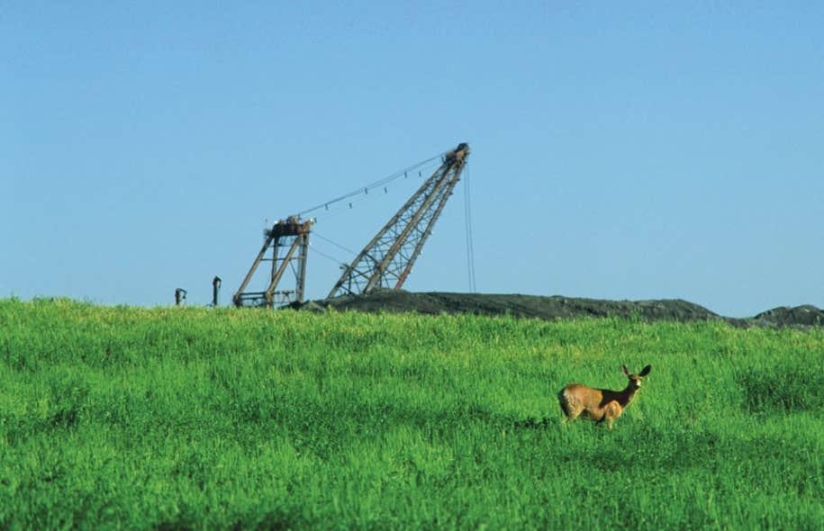 L'exploitation des ressources naturelles entre en conflit avec les espèces animales.