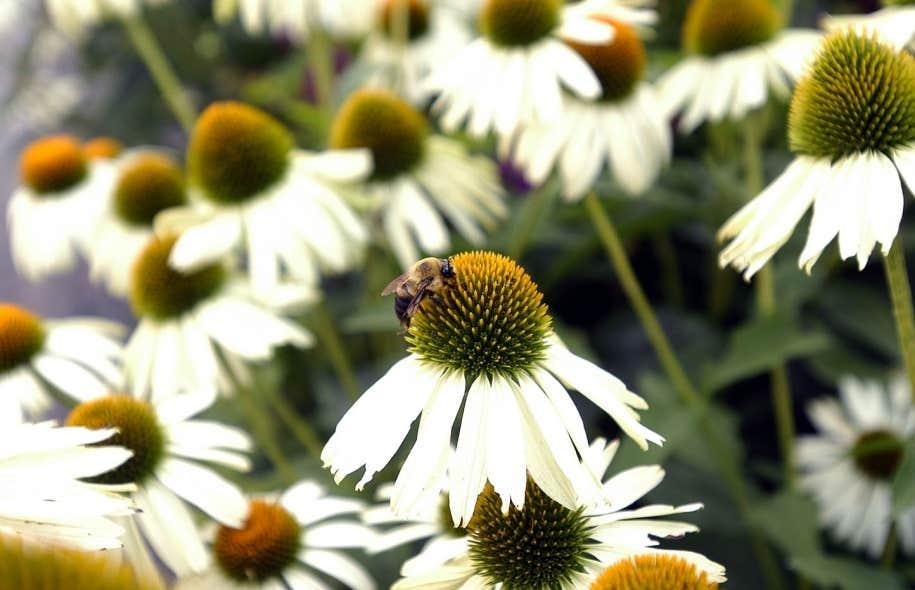 Depuis quelques années, les apiculteurs de toutes les régions du monde déplorent annuellement une perte de colonies d'abeilles allant de 30 à 70 %, et parfois plus.