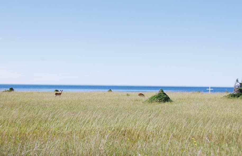 L'île d'Anticosti est surtout reconnue comme un paradis de la chasse au cerf de Virginie.
