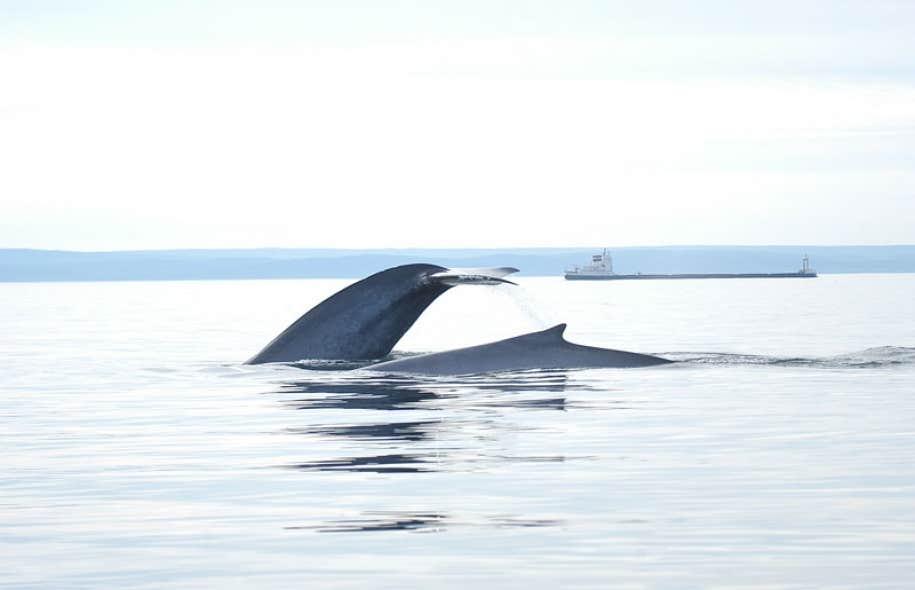 L'étude commandée par Québec souligne entre autres que la capacité d'intervention à répondre à une marée noire est « déficiente ».