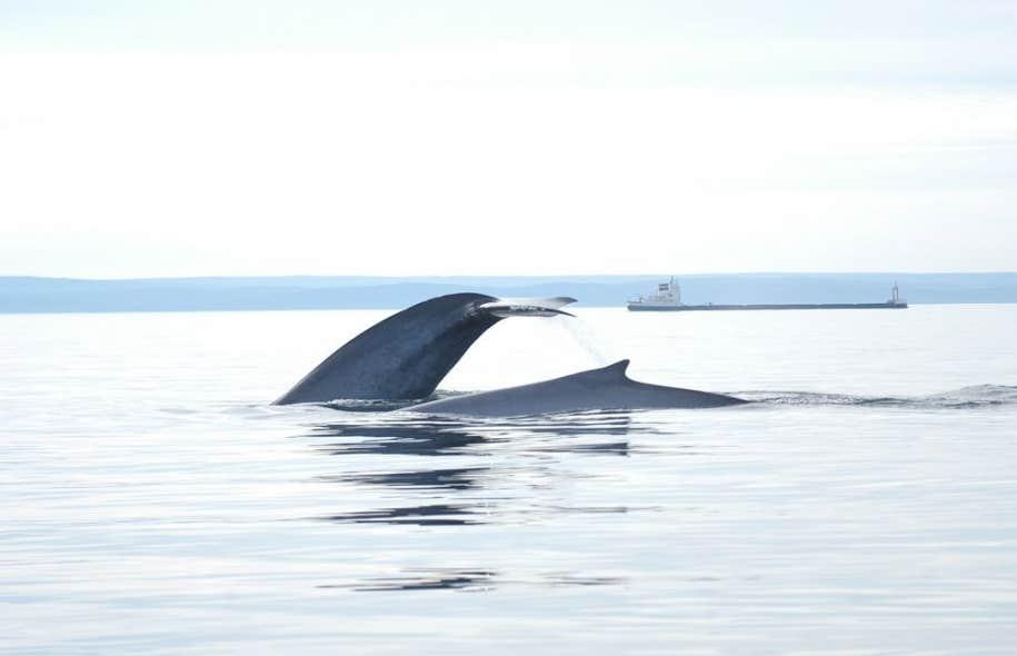 L'étude de 256 pages, qui a été remise plus tôt en janvier à Transports Canada, a déterminé que le golfe du Saint-Laurent est l'une des zones les plus susceptibles d'être le théâtre de déversements majeurs de pétrole.