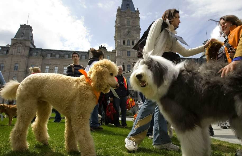 Qu bec veut mieux prot ger les animaux le devoir - Les droits des proprietaires ...