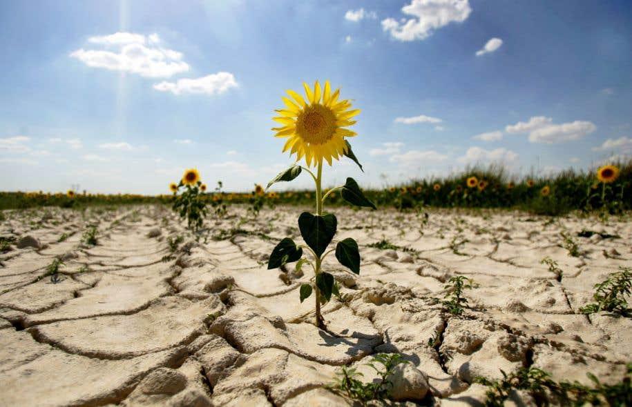 Comment imaginer qu'une économie mondiale basée sur les énergies fossiles effectue un virage vert?