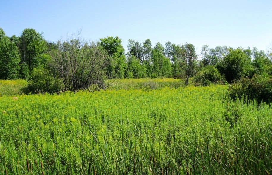 La citoyenne Susan Stacho demande au tribunal de rétablir le zonage agricole d'une parcelle de 20 hectares dans Pierrefonds-Ouest.