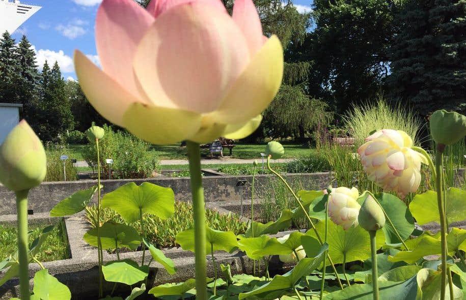 Un bouquet pour les 40 ans le devoir for Amis du jardin botanique