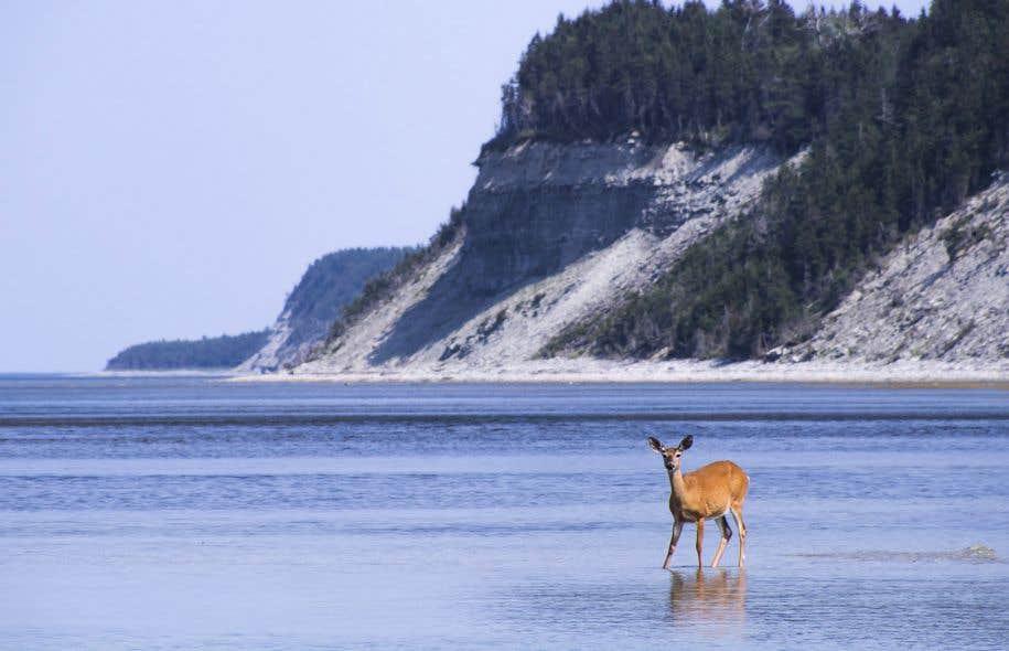 Des études commandées par Québec dans le cadre de l'EES portant sur Anticosti mettent en lumière des risques financiers et environnementaux significatifs liés à l'exploitation de pétrole et de gaz sur l'île.