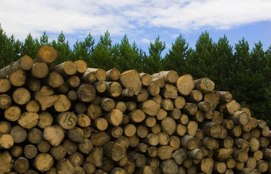 Depuis octobre dernier, les exportateurs canadiens de bois d'oeuvre ont à nouveau accès sans entrave au marché des États-Unis, après une décennie de vaches très maigres.