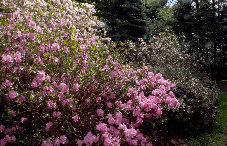 Le rendez vous horticole 2016 le devoir for Jardin botanique montreal 2016