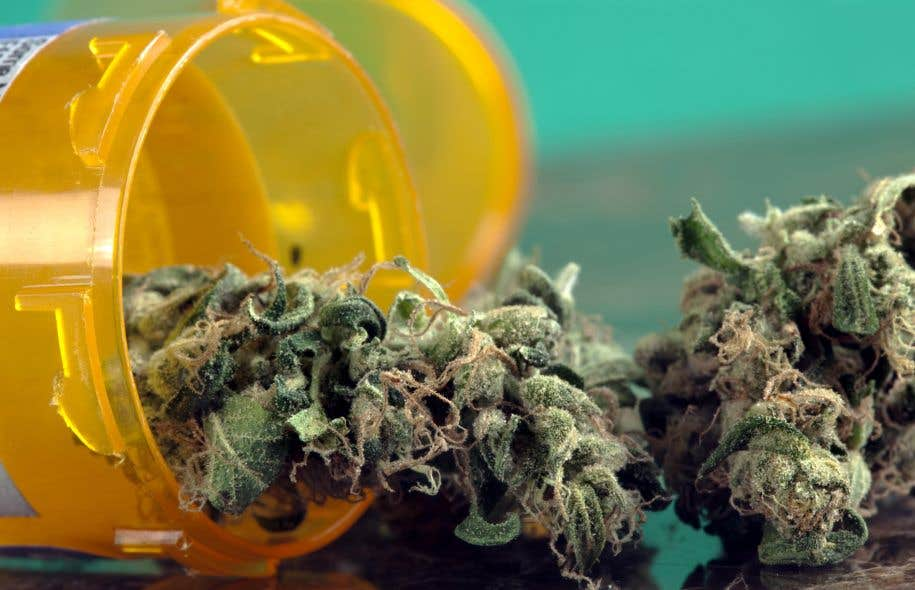 Les effets secondaires du cannabis sont très différents de ceux de la morphine et des autres opioïdes, et probablement moins graves.