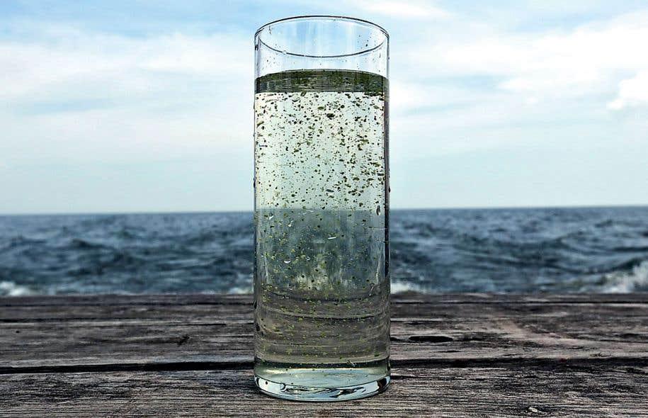 En 2014, la ville de Toledo, en Ohio, qui borde le lac Érié, a été en bonne partie privée d'eau potable en raison de la présence de cyanobactéries.