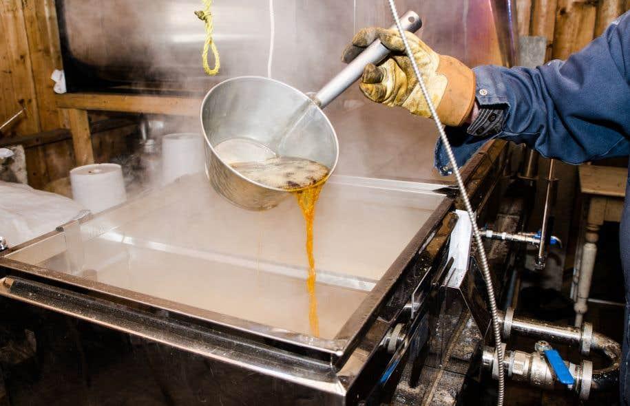 Une étude s'inspire des constats de producteurs de sirop d'érable du Canada et des États-Unis, qui ont remarqué que leur production étaiet influencée par le climat.