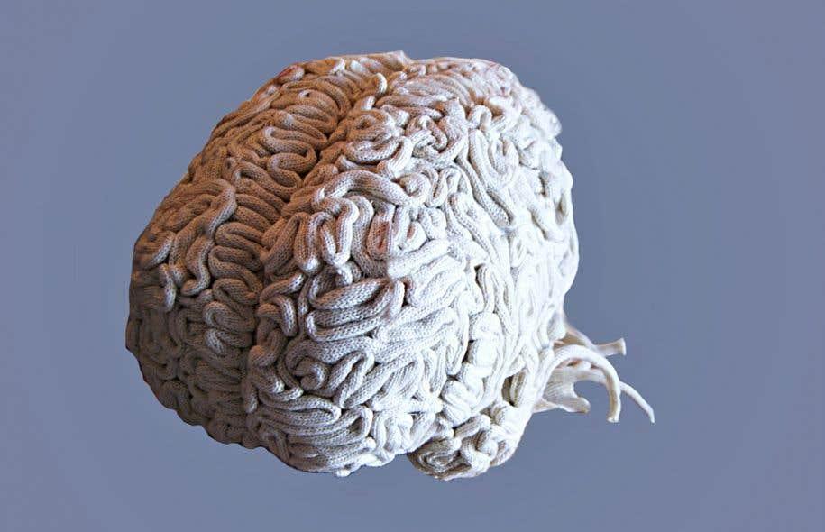 «Cerveau tricoté» (2017), collectif Colifichet