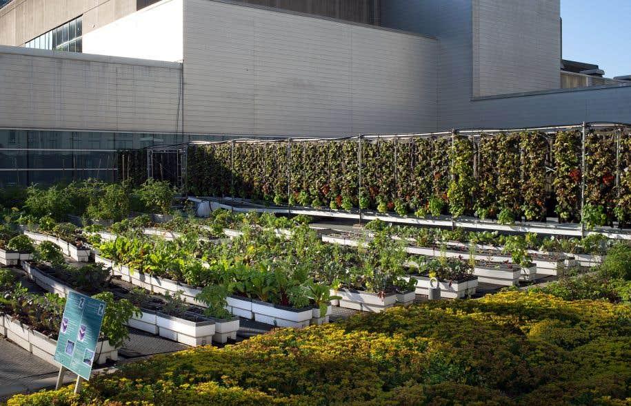Les toits verts peinent pousser montr al le devoir - Jardin sur terrasse toit dijon ...