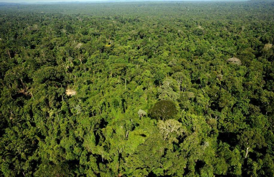 Une réserve forestière de l'État du Para, dans le nord du Brésil