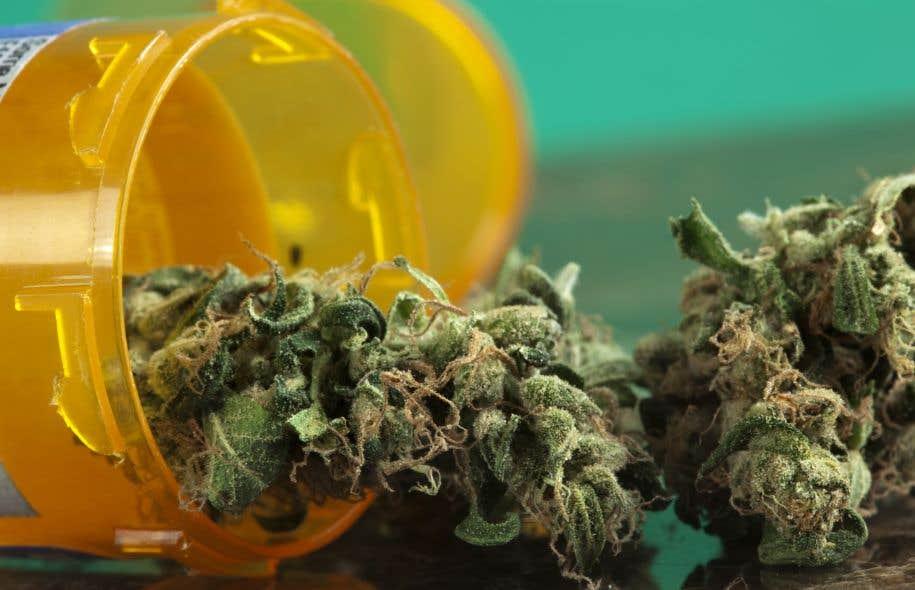 Le comité permanent de la santé entendra jeudi soir un panel d'experts sur les implications internationales de la légalisation du cannabis.
