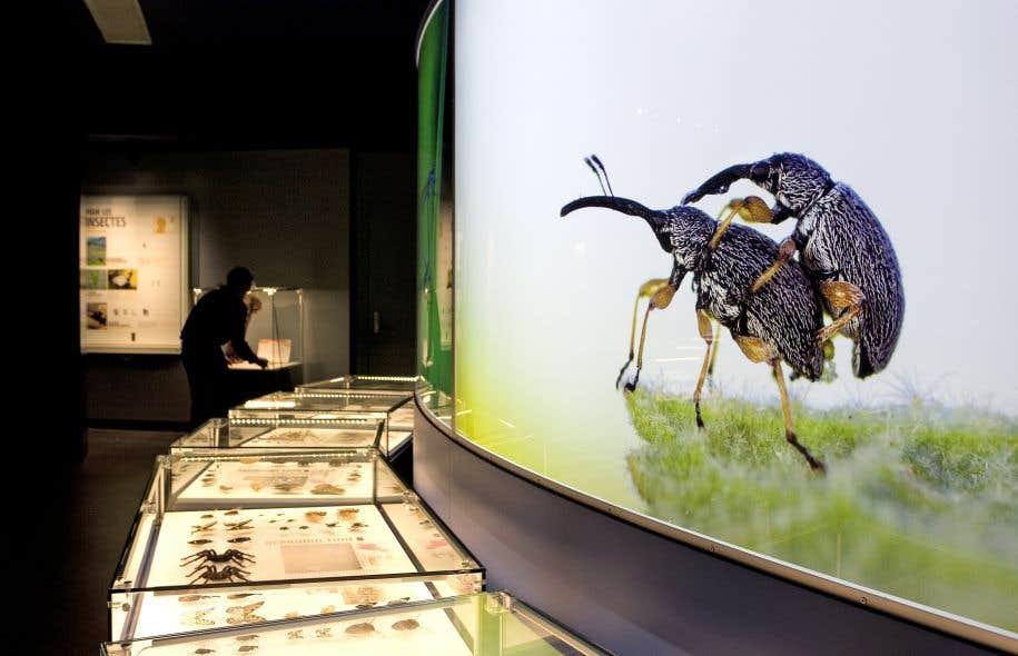 Les travaux d'agrandissement de l'Insectarium devraient coûter 28,8 millions, au lieu des 23 millions initialement prévus, et la réouverture de l'institution sera reportée d'un an.