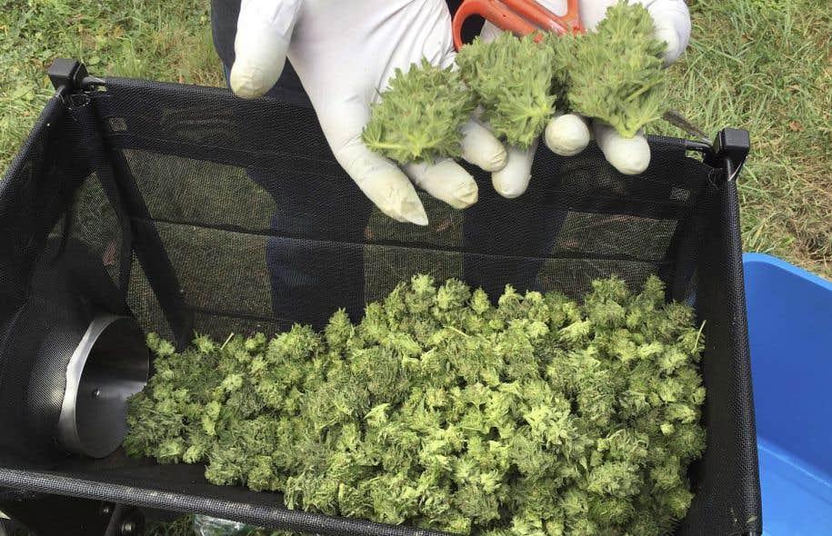 Comme l'a appris l'État de Washington en 2014, l'établissement des prix et des taxes sur la marijuana peut influencer grandement la part du commerce illicite.