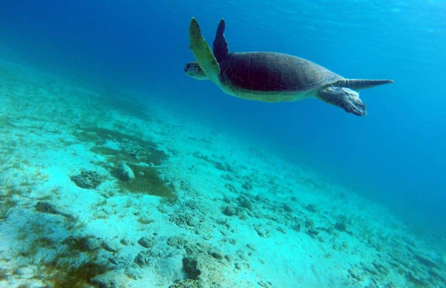 Ce phénomène montre que ces récifs coralliens et les écosystèmes qui en dépendentsont en première ligne du réchauffement planétaire.