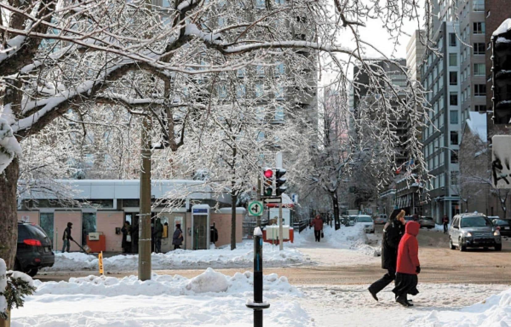 Si Montréal a tant de problèmes avec les arbres, c'est parce que la ville connaît énormément d'épisodes de verglas.