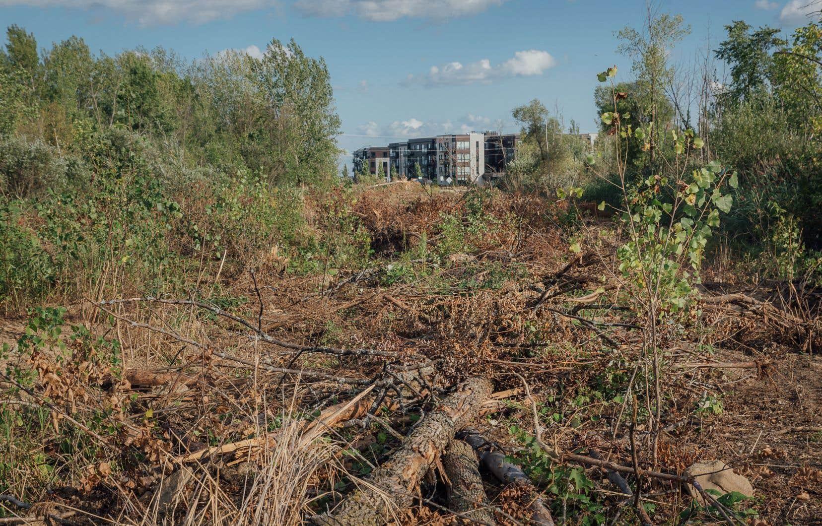 Le prolongement d'un boulevard de Longueuil dans l'habitat de la rainette faux-grillon risque d'avoir «des conséquences significatives sur le maintien de la population», selon les experts du gouvernement du Québec.
