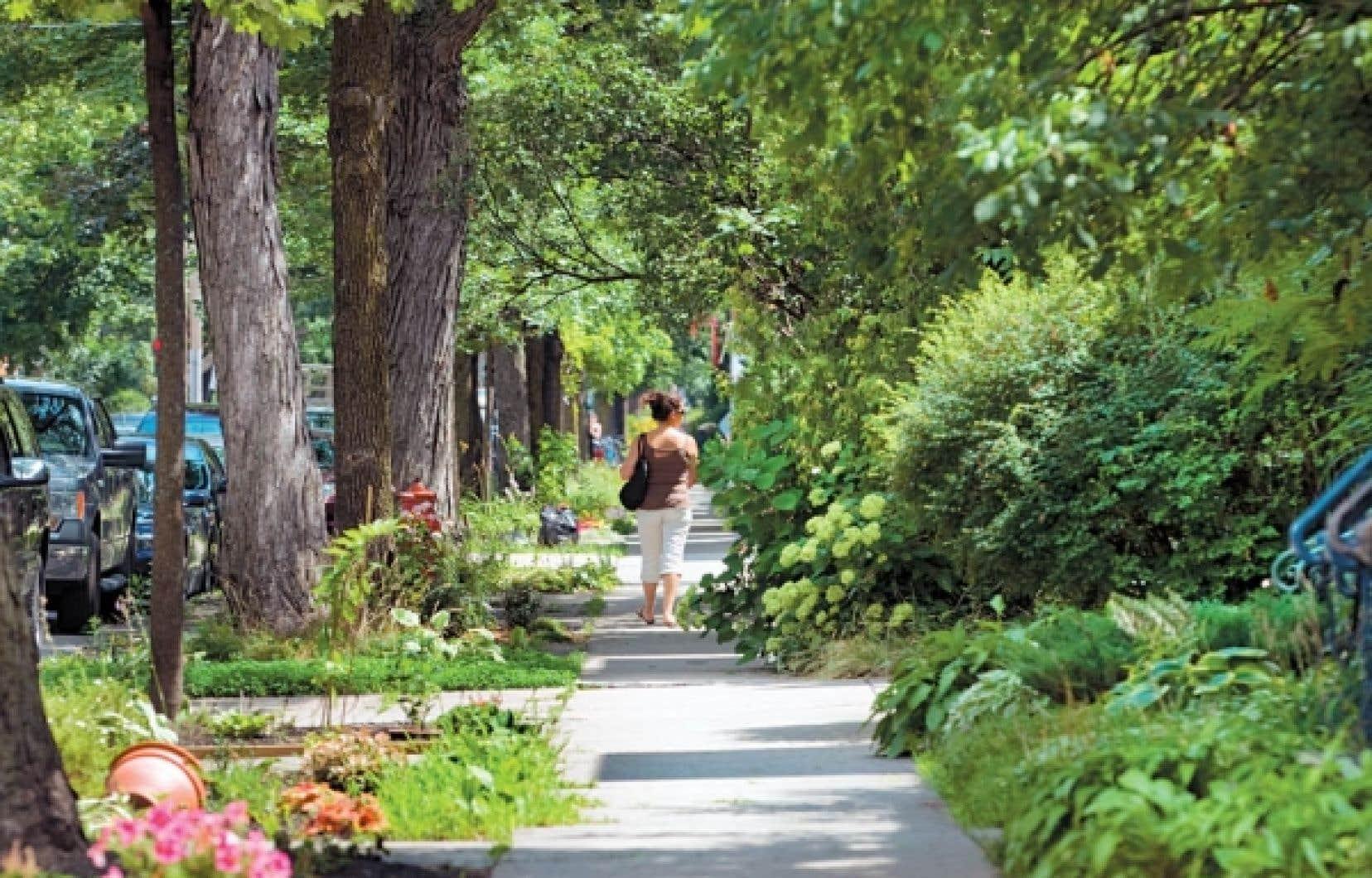La biodiversit&eacute; montr&eacute;alaise n&rsquo;est pas que l&rsquo;affaire du mont Royal et autres parcs-nature. Les rues de la m&eacute;tropole en plein &eacute;t&eacute; en sont de bons exemples.<br />