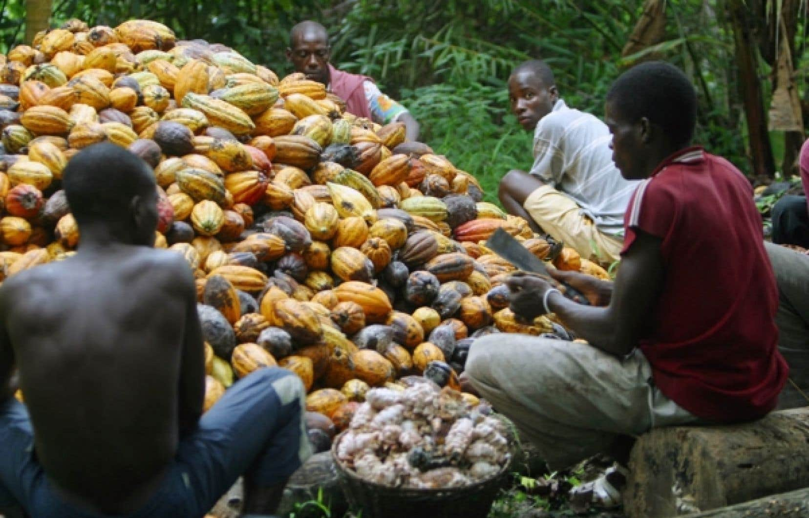 <div> Culture du cacao en C&ocirc;te d&rsquo;Ivoire</div>