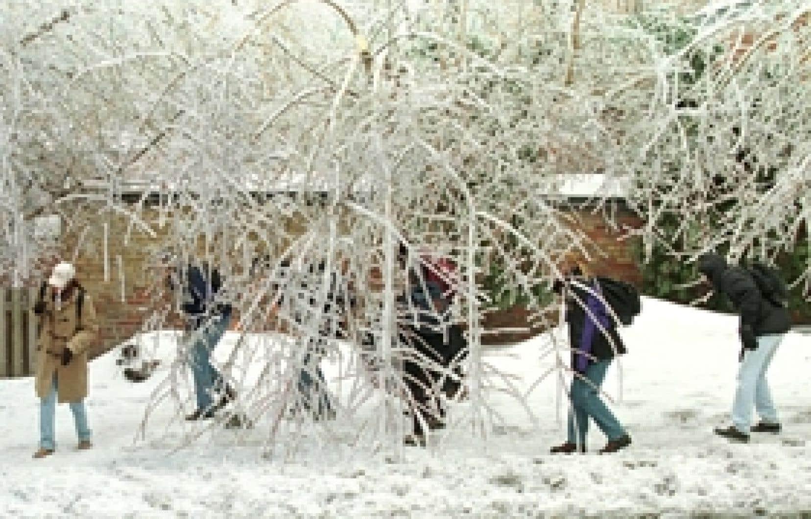 Des passants se penchent pour éviter les branches pendantes.