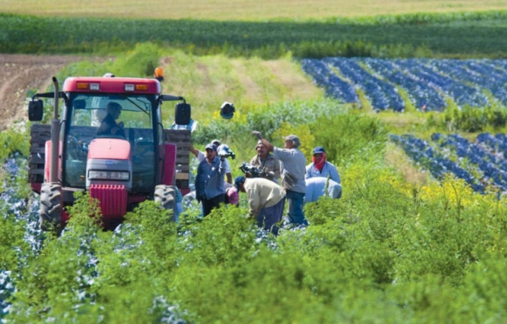 Le Canada a accueilli 31 000 travailleurs étrangers agricoles et laboureurs l'an dernier .