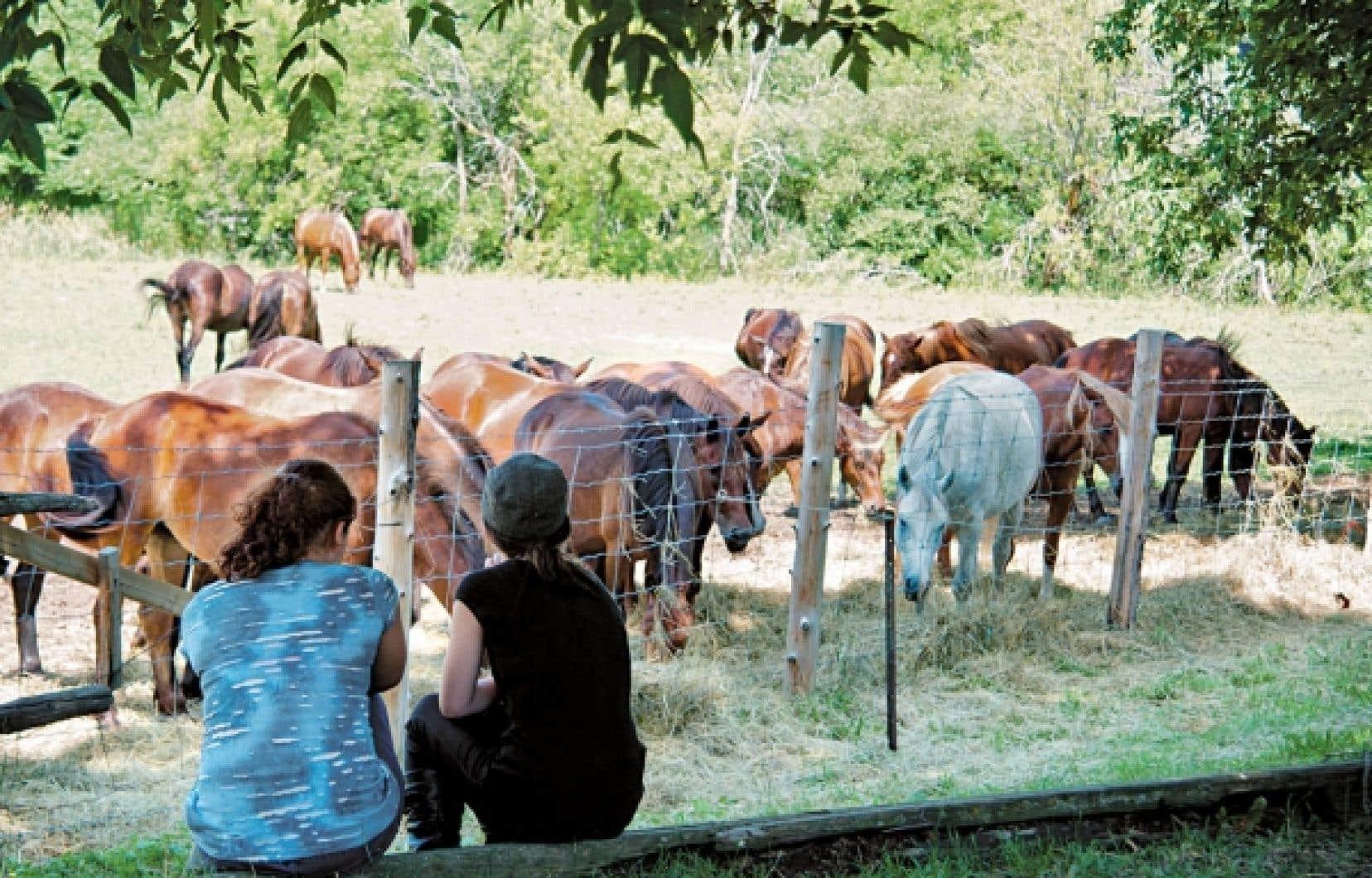 Traite de vaches ou écossage de petits pois? Sans horaire, que celui de ses envies, ce sera plutôt la pause rêveries équestres et confidences.