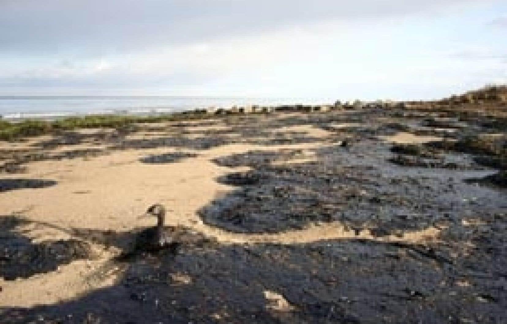 Cette marée noire pourrait être le pire événement du genre survenu en Russie au cours des dernières années.