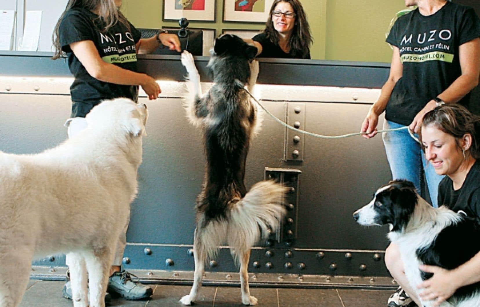 Chez MUZO, un hôtel pour animaux de compagnie à Montréal, votre chien a accès au salon de toilettage, à des cours de dressage et même à un gym !