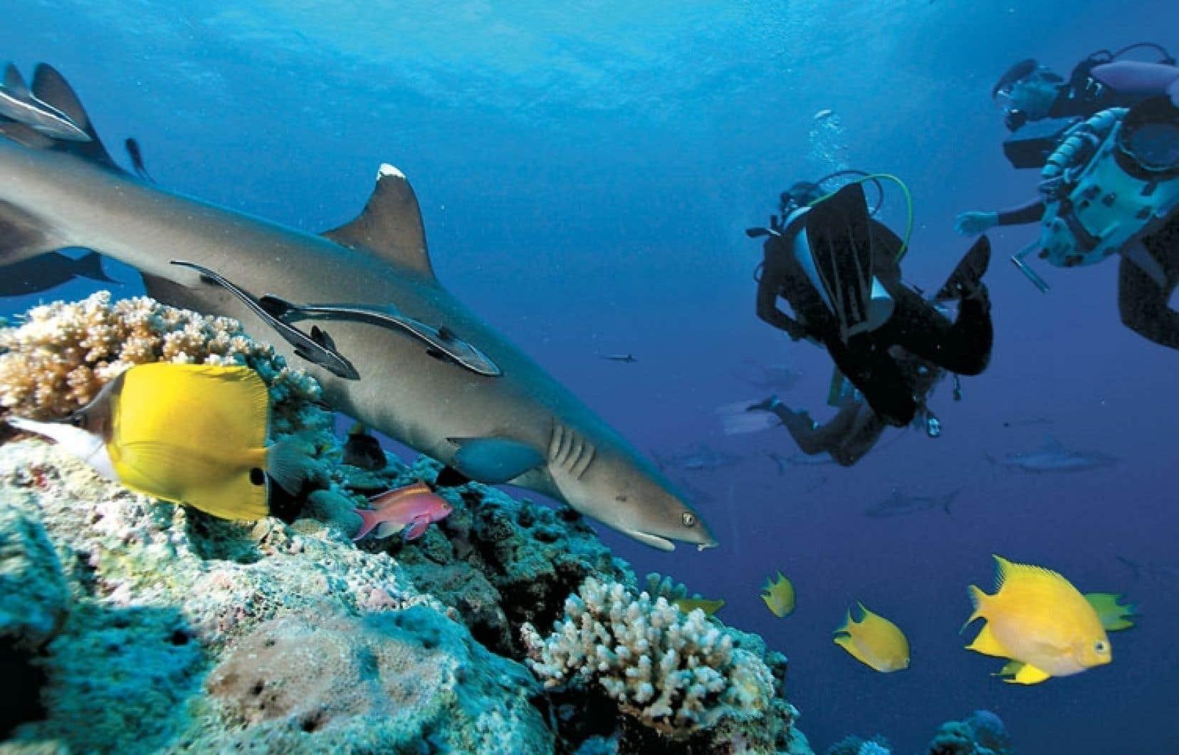 <div> La grande barrière de corail a perdu la moitié de ses coraux en à peine trois décennies.</div>