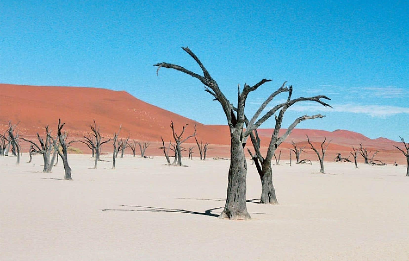 Le plateau de Dead Vlei, l'un des lieux les plus courus du secteur.