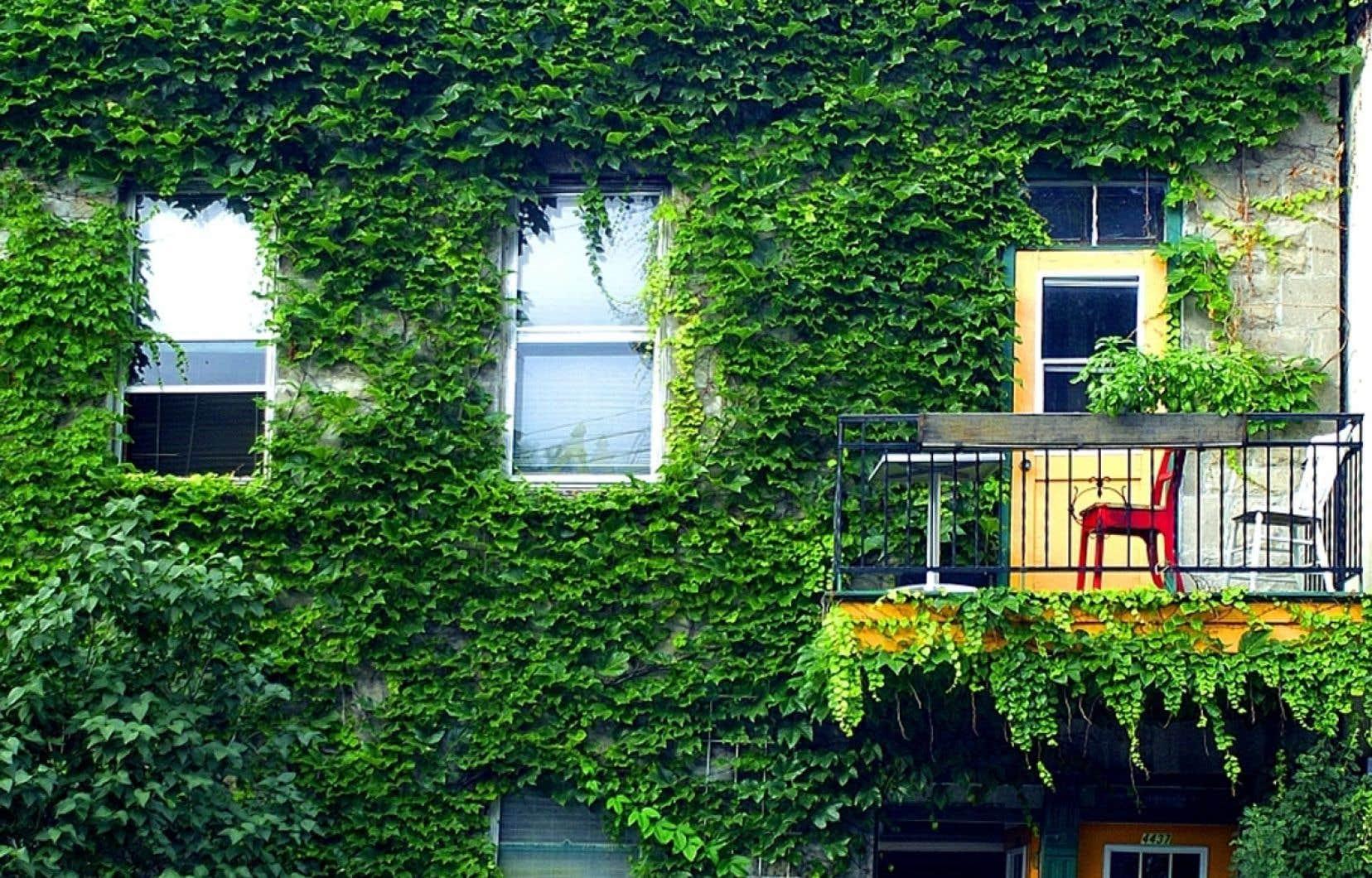 Un mur végétal permet de mieux réguler la température des résidences.