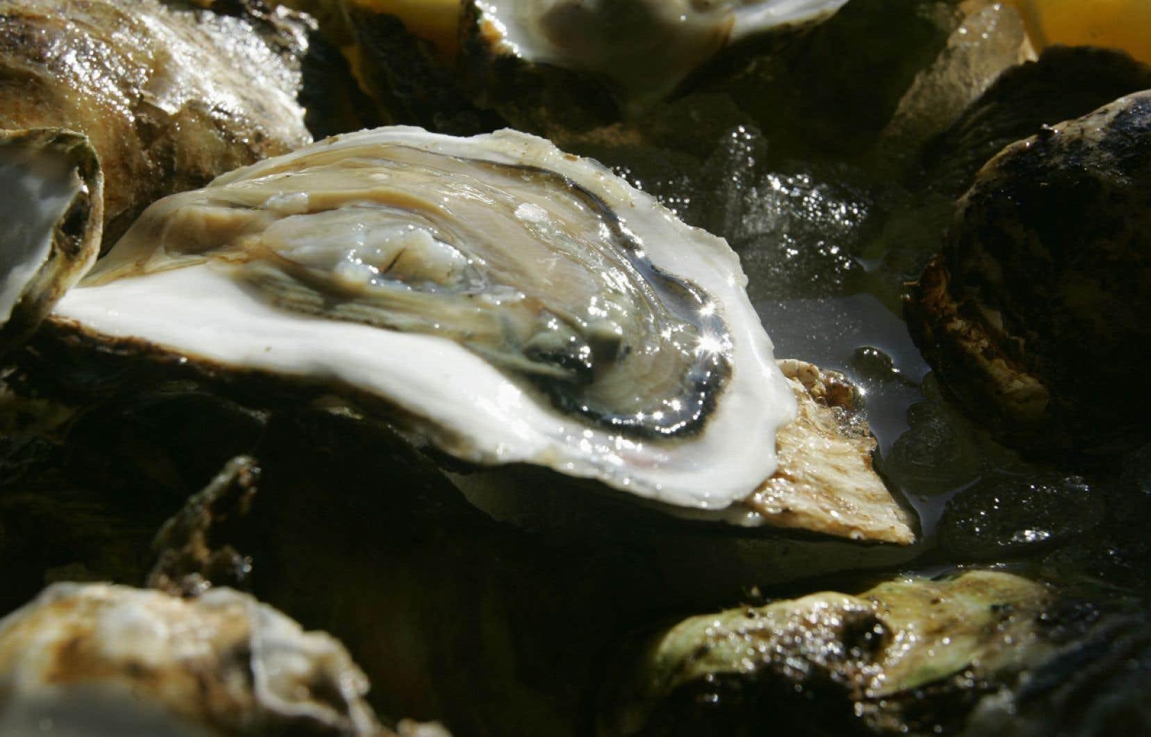 L'acidification des océans réduit le ph de l'eau, ce qui provoque une série d'impacts, dont une réduction de la disponibilité du carbonate de calcium, essentiel aux jeunes mollusques pour se constituer une coquille.