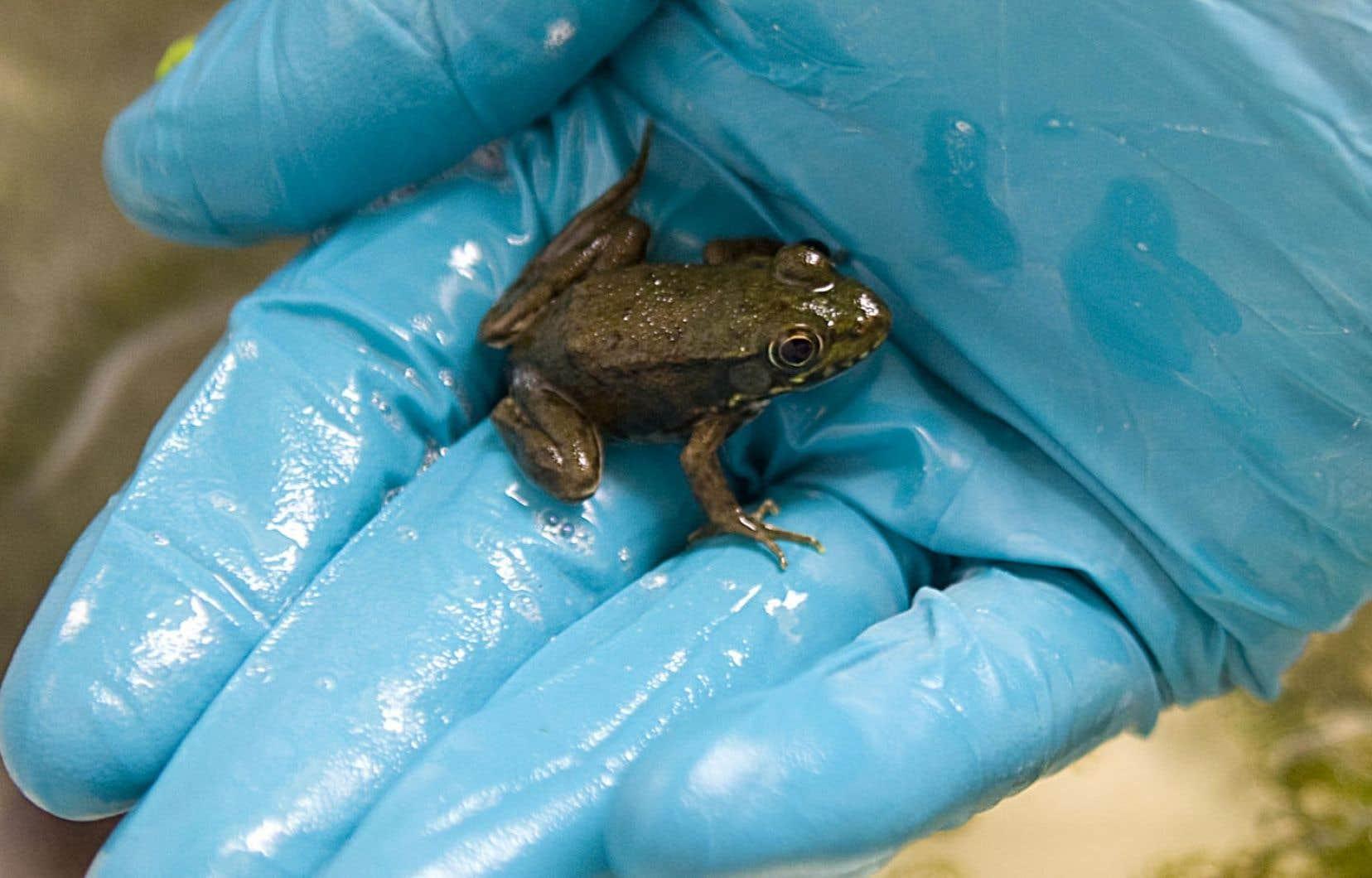 Les experts ont utilisé des données provenant de quelque 570 espèces vivantes de vertébrés terrestres. Leurs travaux comprenaient des espèces d'amphibiens, de reptiles, d'oiseaux et de mammifères.