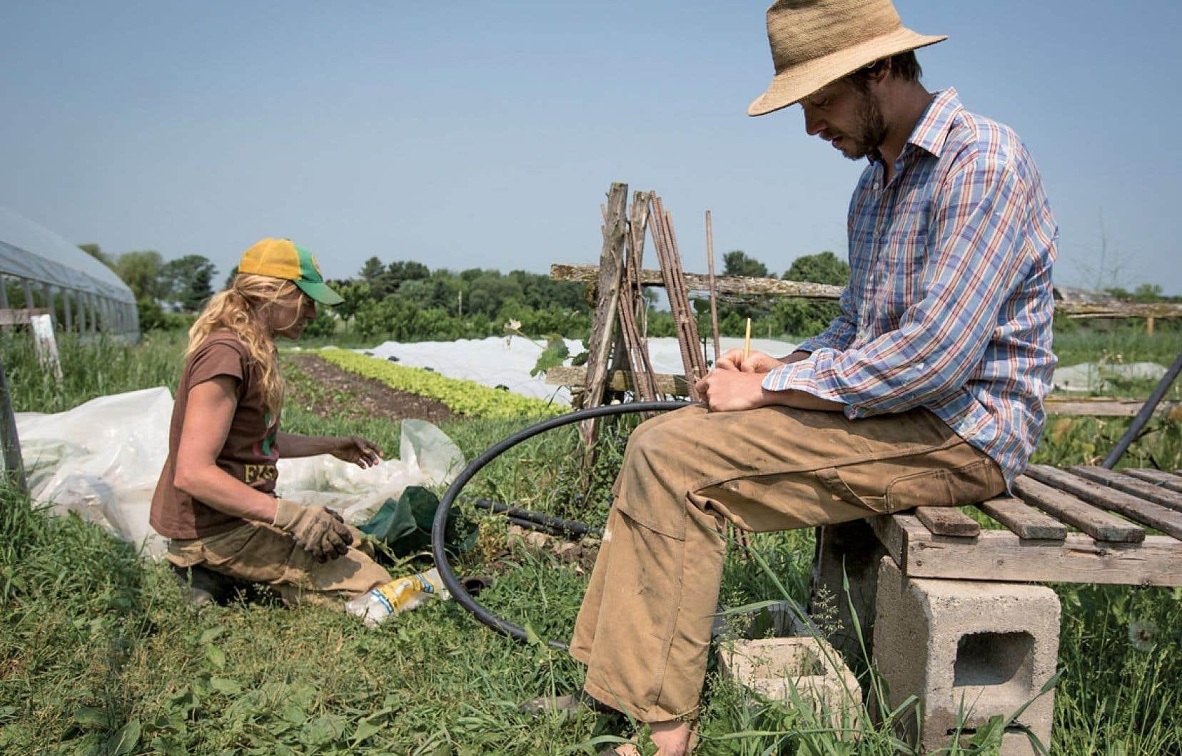 Planifiant les récoltes des Jardins de la Grelinette, Maude-Hélène Desroches et Jean-Martin Fortier s'échinent à faire connaître leur modèle de micro-ferme sur un hectare. Les pelleteux de compost ont appris à compter.