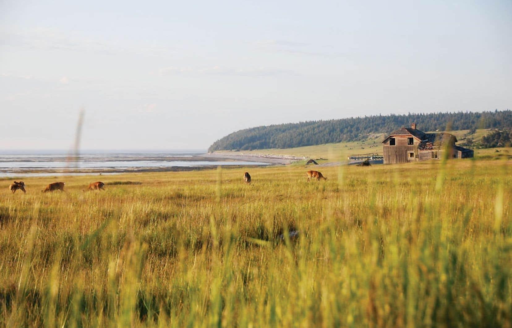 Anticosti a beau être la plus grande île du Québec, plus vaste que la Corse, « la perle du Saint-Laurent » demeure la fille inconnue de la terre Québec. Ci-dessus : l'emplacement de l'ancien village de Baie-Sainte-Claire.